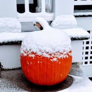 Pumpkin covered with snow