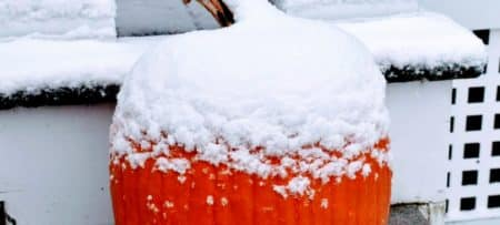 Pumpkin with snow