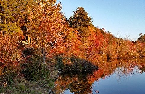 Small pond surrounded by dense trees showing fall colors of yellow, red and orange.