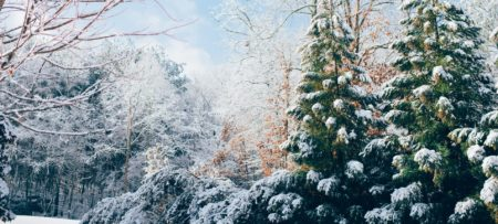Wooded area covered in fresh snow with green evergreens and a blue sky in the background